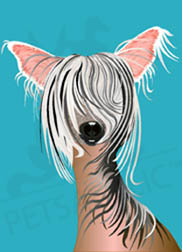 Digital art greeting card: Tulip the Chinese Crested Dog