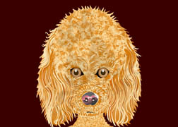 Madison the Poodle dog note cards