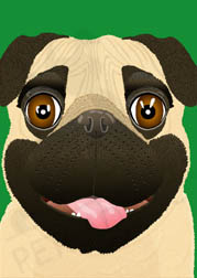 Digital art greeting card: Bugsy the adorable Pug dog greeting card